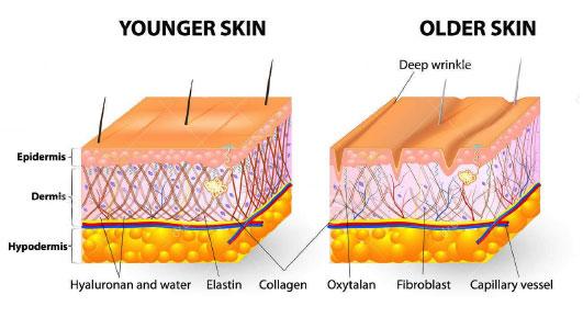 De huid